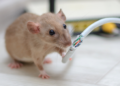 Top Tips to Protect Your Home From A Mouse Infestation